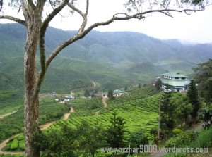 cameron-highlands-boh-tea-plantation